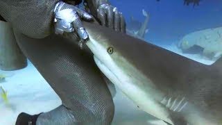 Each year Shark Week captivates millions of TV watchers around the globe - and for good reason. The cool, scary, fascinating, fishy creatures have been on Earth for literally millions of years! Get a crash course in shark awesomeness before Shark Week gets started with this list of all things shark - by the numbers.