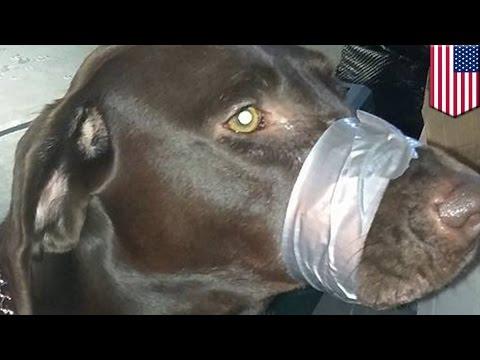 Женщина заклеила пасть собаке, чтоб не лаяла (видео)