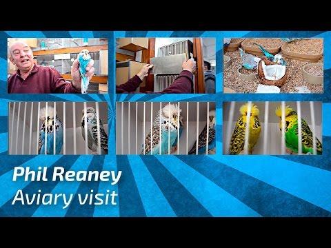 Phil Reaney |United Kingdom| 2017 [Budgie Planet] Exhibition Budgies/Periquito Inglés