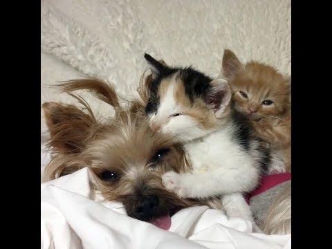gattini-orfani-si-rivolgono-ad-una-cagnolina-che-li-calma-e-gli-ricorda-la-mamma