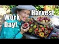 HUGE Urban Garden Workday | Harvest | Los AngelesHUGE Urban Garden Workday | Harvest | Los Angeles<media:title />