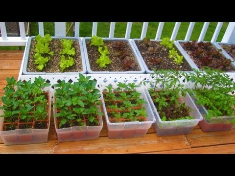 , title : 'How to start a Container Garden from Seed Easy! STEP by STEP grow vegetables plant organic'