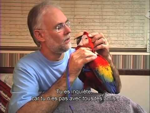 Mode d'Emploi du Harnais Aviator - Version Française