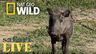 Safari Live - Day 128 | Nat Geo Wild by Nat Geo WILD