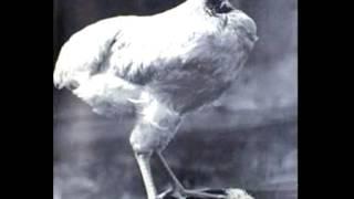 La historia de un pollo que paso de ser una rica cena a un icono para una ciudad, que para algunos es un simbolo de las ganas de vivir y para otros el resultado de un error de un hachazo de un granjeroLa web de mikehttp://www.miketheheadlesschicken.org/