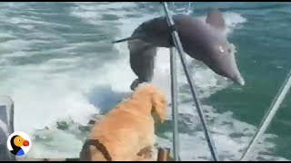 Boating Dog Sees Dolphin | The Dodo