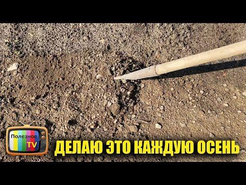 Как повысить плодородие почвы на следующий год