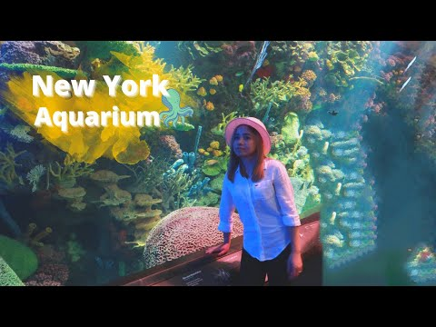 Du l?ch - New York Aquarium - cu?c s?ng m?_Aquarium