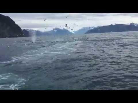 他們在風平浪靜的海上突然看到『一群行徑怪異的飛鳥』,下一秒…迎接而來的是唉唉大叫!