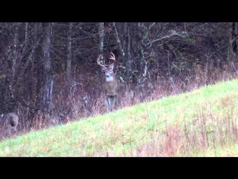 Whitetail Crossing Management Buck