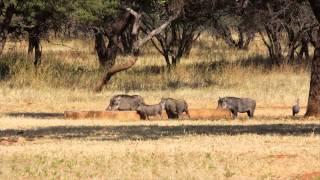 Otavi Namibia  City new picture : Ohange Safari Lodge - Namibia - Otavi - Etosha - ResDest.com