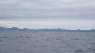 Как прыгают киты на Азорских островах. \ As whales on the Azores jump.