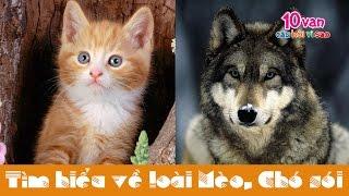 Động vật có vú: Mèo và Chó sói (10 vạn câu hỏi vì sao)