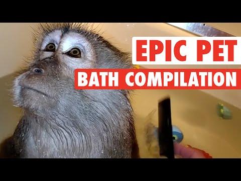 epic pet baths - esilaranti bagnetti di cuccioli
