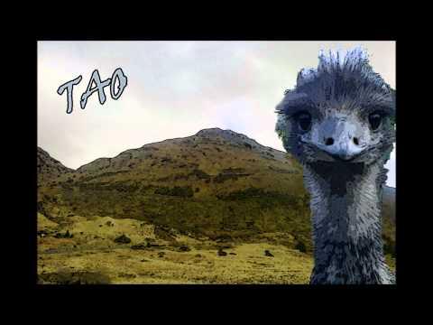 Coconot - Tao