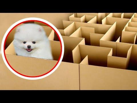 NTN - Cún Con Thử Thách Thoát Khỏi Mê Cung (Puppy solving the maze challenge) - Thời lượng: 10:21.