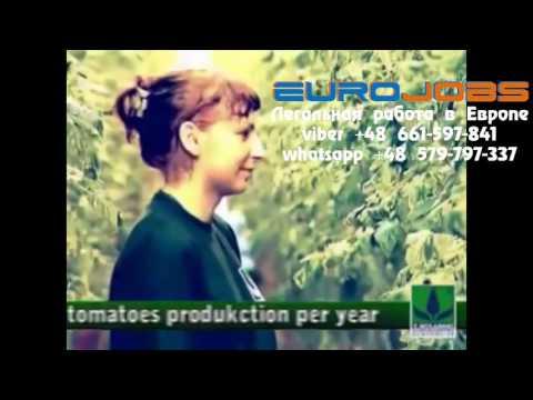 Работа в Польше на теплицах и полях EuroJobs