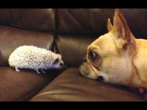 divertenti cani che incontrano cuccioli di altre specie
