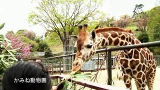 日立市プロモーションビデオ~会いに行きたい ひたち(ショートバージョン)