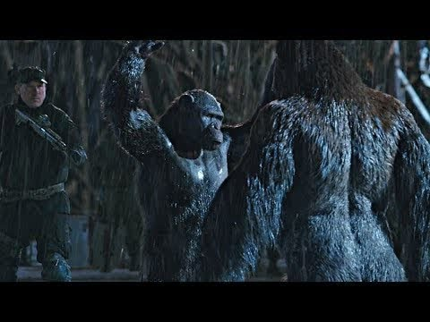 Rocket vs Red Donkey - Fight Scene | War for the Planet of the Apes (2017)#LOWI