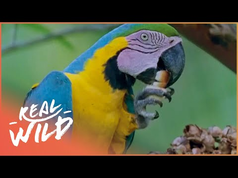 The Incredible Amazon Animals Wildlife Documentary) | Creatures Of The Magic Water | Real Wild