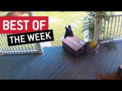 The Best Viral Videos of the Week 826054117654174593