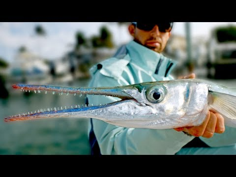 Giant Houndfish, Jacks and Sharks - Inshore Fishing in Florida - ft. Paul Cuffaro - Thời lượng: 12 phút.