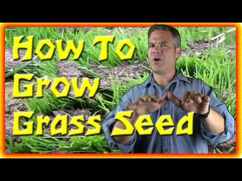 grass - Today I talk about growing grass seed and when to plant grass seed. I am NOT, however, talking about methods for growing grass seed... rather, giving you 3 u...