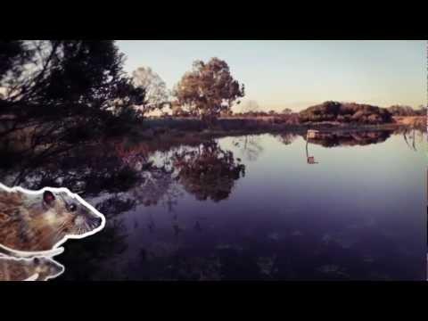Animals of the wetland