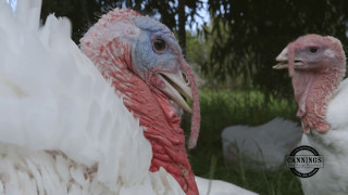 Leadoux Turkeys