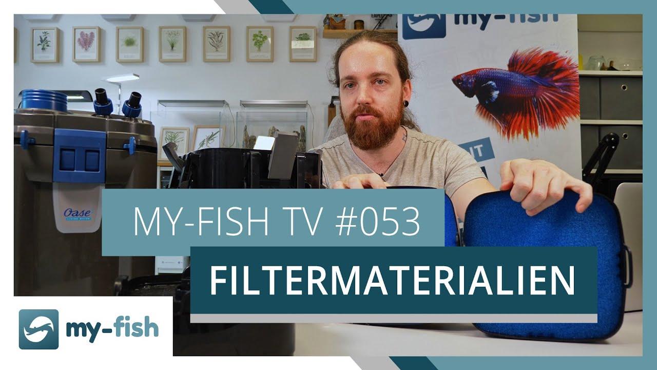 my-fish TV - Deine Nr. 1 Anlaufstelle für alle Themen rund um die Aquaristik 11