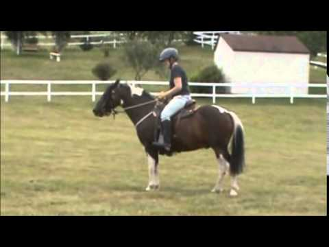 Ponies/Horses Trained to Ride & Drive-- Patch