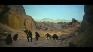 340ml - Australopithecus