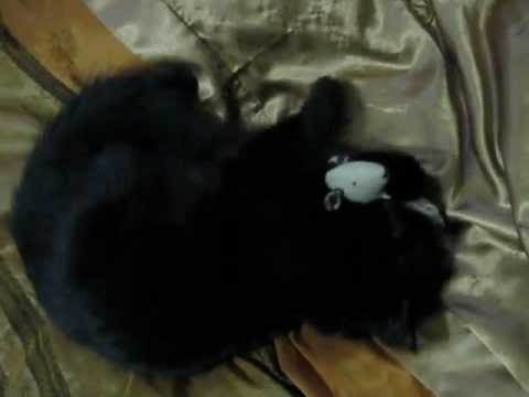 twiggywent - Twiggy went nuts with her mouse toy that has catnip (aka, kitty marijuana, ha ha) inside.
