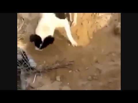 cao-enterra-filhote