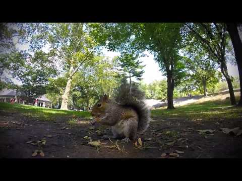 Central Park Squirrel , by Allan J. Aston (8,1)
