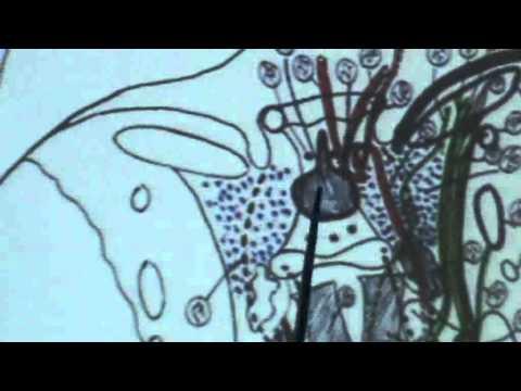 12) Dr.Ahmed Galal 30/10/2014 [ cavernous sinus - emissary veins- pituitary gland - eyelids]
