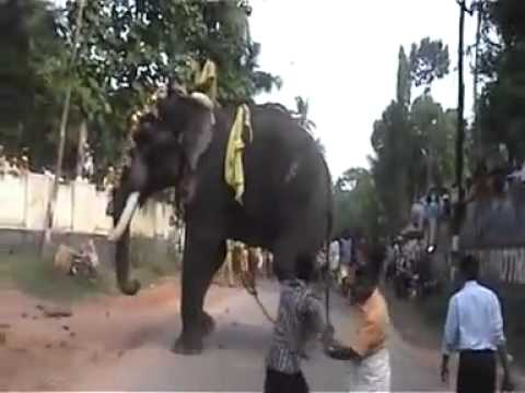 Video Elephant attack.mp4 download in MP3, 3GP, MP4, WEBM, AVI, FLV January 2017