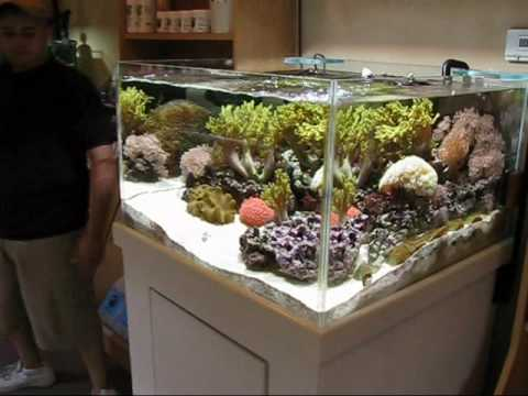 Japanese Style Soft Coral Reefscape