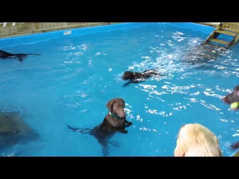 A kutya, aki vízilabda kapusnak készül