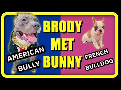 When Brody 🐶 Met Bunny 🐰Most Awaited Video | Funny Dog and Family Vlogs | Harpreet SDC