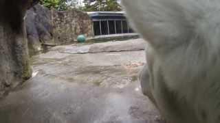Polar Bears Collar camera view