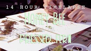 Honey bee made with pressed fern - Art Timelapse by Helen Ahpornsiri