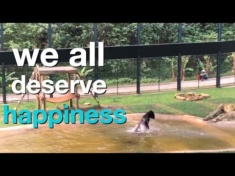 Rescued bears revel in International Happiness Day 2019