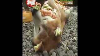 測試動物極限忍耐力的方法(動物, 電視節目)