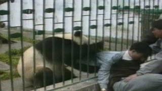 Maybe This Panda Loves Jacket