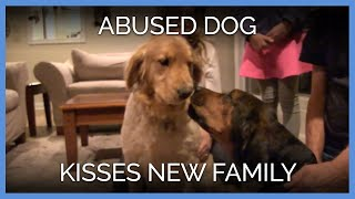 Abused Dog Kisses New Family | PETA Animal Rescues