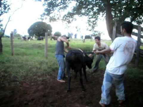 montarias em touros terra rica