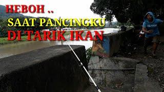 Download Video HEBOH SAAT PANCING DI TARIK IKAN BESAR MP3 3GP MP4
