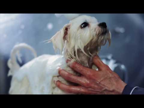 MIAU&WOOF episode 3 Malteser Welpe, baden mit tränenfreien Shampoo von MIAU&WOOF und Claudia Franke